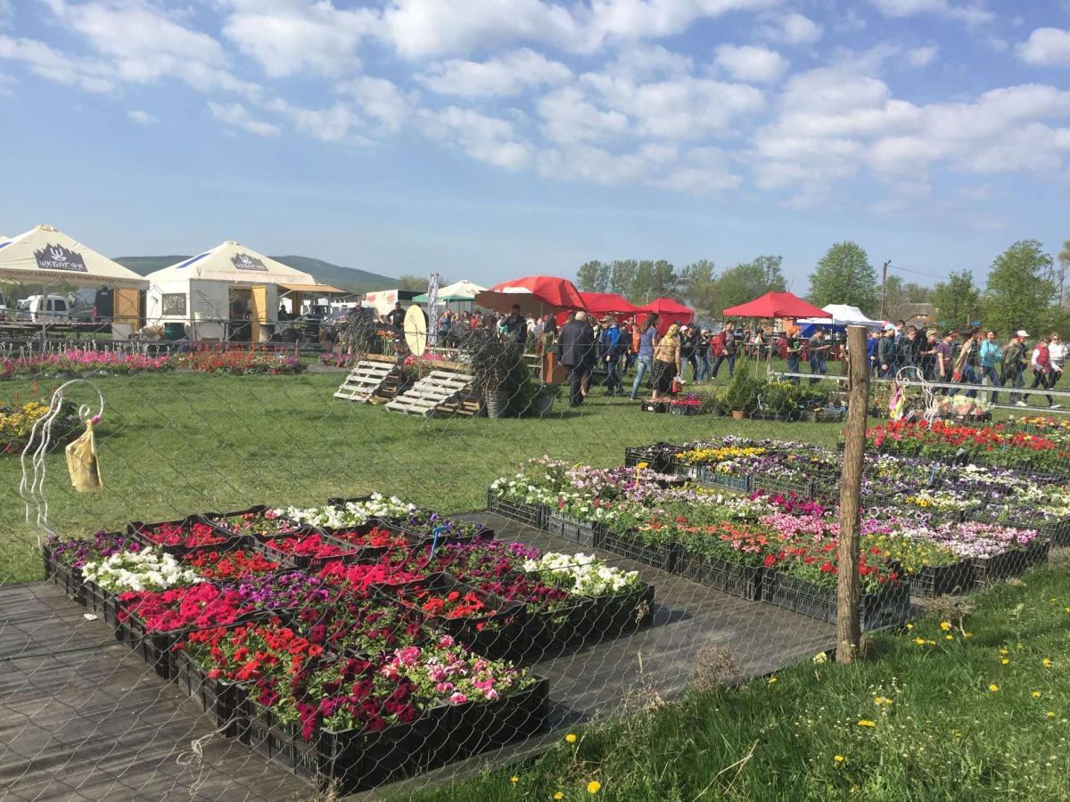 На Буковине стартовал фестиваль тюльпанов На Буковине стартовал фестиваль тюльпанов 6 6