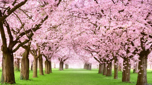 Где провести майские праздники: афиша мероприятий Где провести майские праздники: афиша мероприятий 7 5