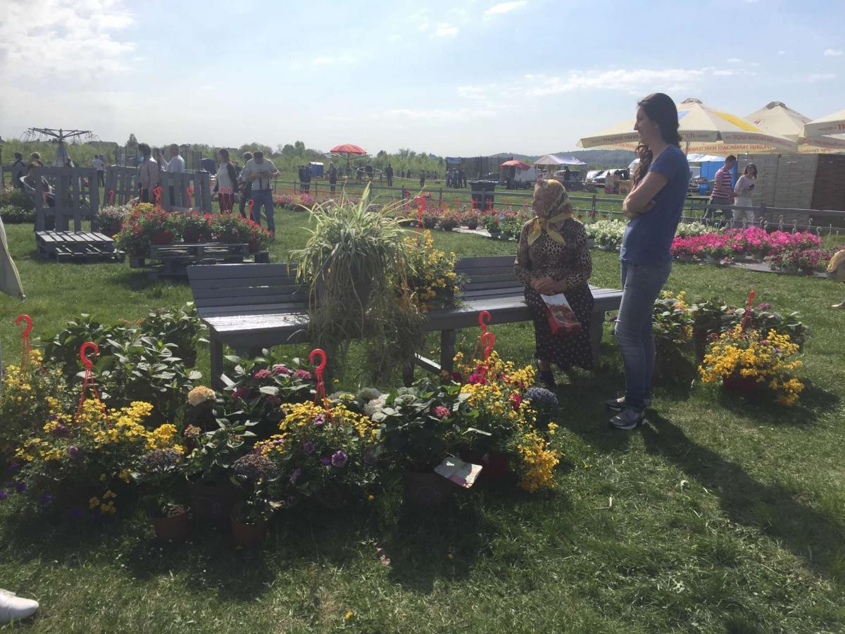 На Буковине стартовал фестиваль тюльпанов На Буковине стартовал фестиваль тюльпанов 8 3