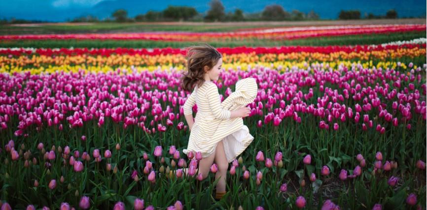 На Буковине стартовал фестиваль тюльпанов На Буковине стартовал фестиваль тюльпанов 999999999