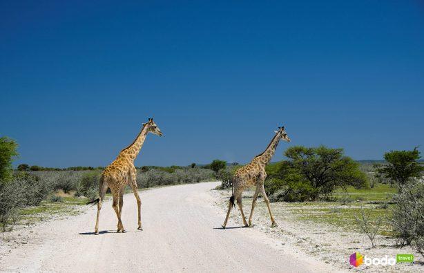 «Очень приятно, слон!» Все прелести Африки в одной стране «Очень приятно, слон!» Все прелести Африки в одной стране Foto 2 3 614x395