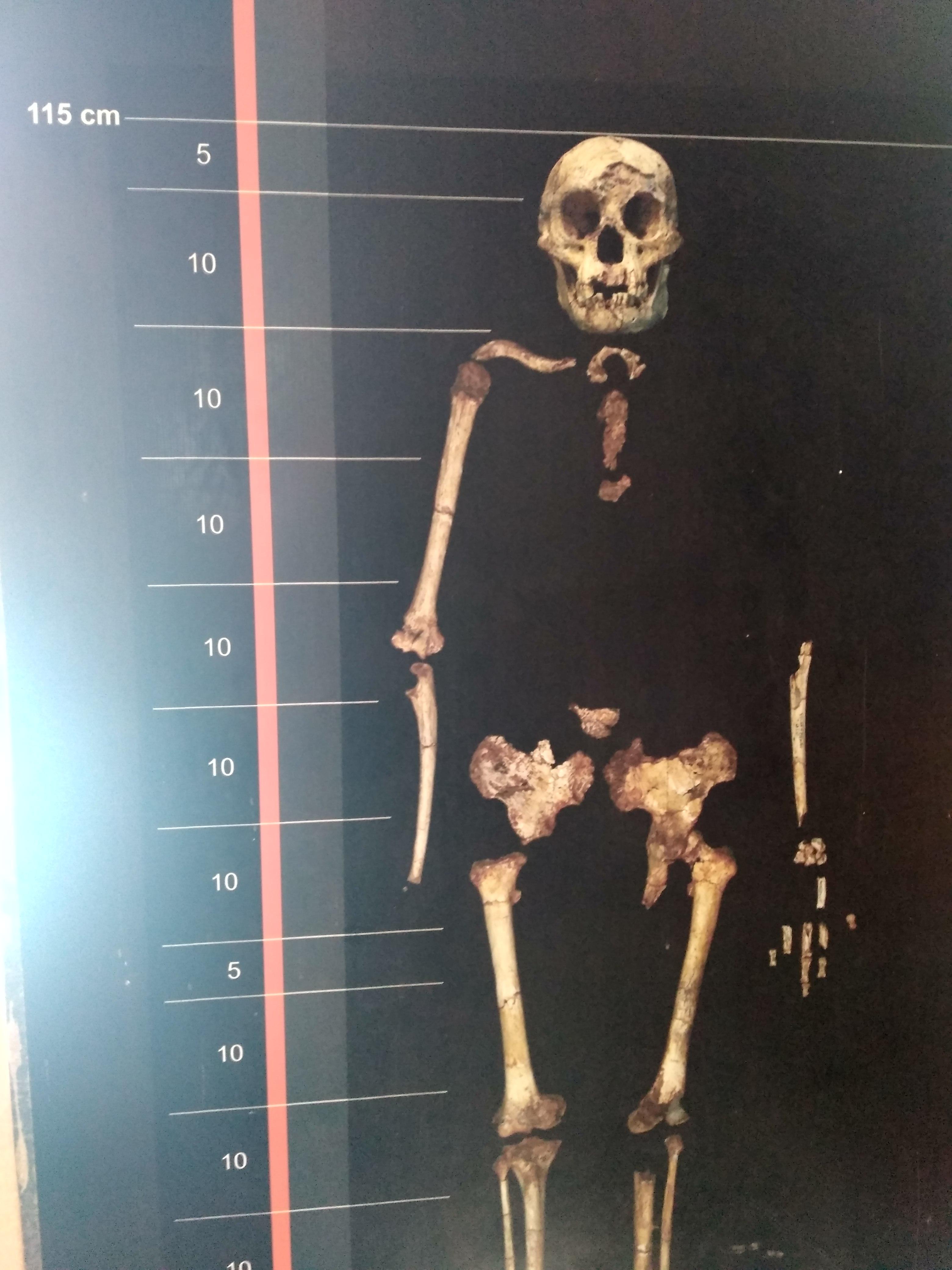 Остров Флорес в Индонезии: хоббиты, бетель и жертвоприношения Остров Флорес в Индонезии: хоббиты, бетель и жертвоприношения IMG 20180306 100527 HDR