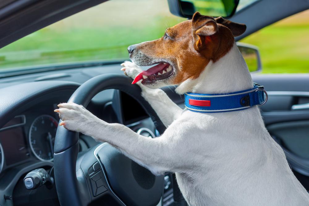 В Китае пес управлял фургоном