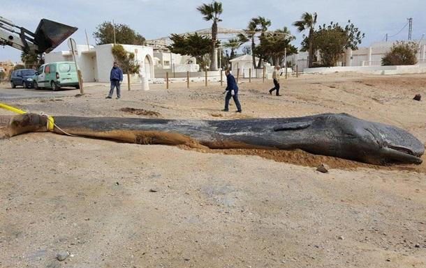 В Испании в желудке кита нашли 29 кг пластика.Вокруг Света. Украина
