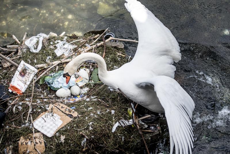 Пластиковая Молдова: одноразовые пакеты и бутылки убивают природу и здоровье