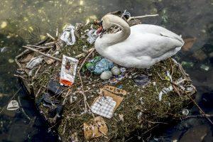 В Копенгагене лебедь свил гнездо на мусорном острове (фото)