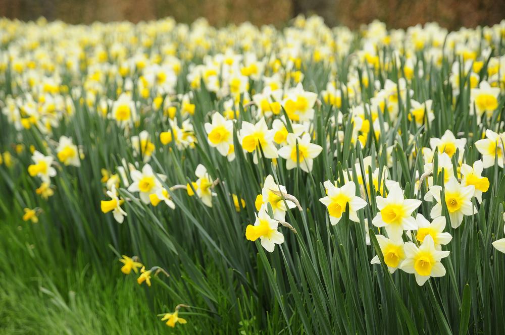 Где провести майские праздники: афиша мероприятий Где провести майские праздники: афиша мероприятий shutterstock 1023983722