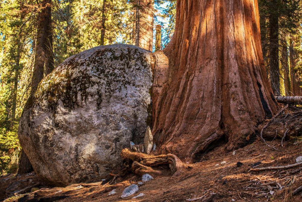 День деревьев: 8 интересных фактов о легких планеты День деревьев: 8 интересных фактов о легких планеты shutterstock 1027783735