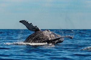 Предками голубых китов были вовсе не зубастые хищники. Но кто?