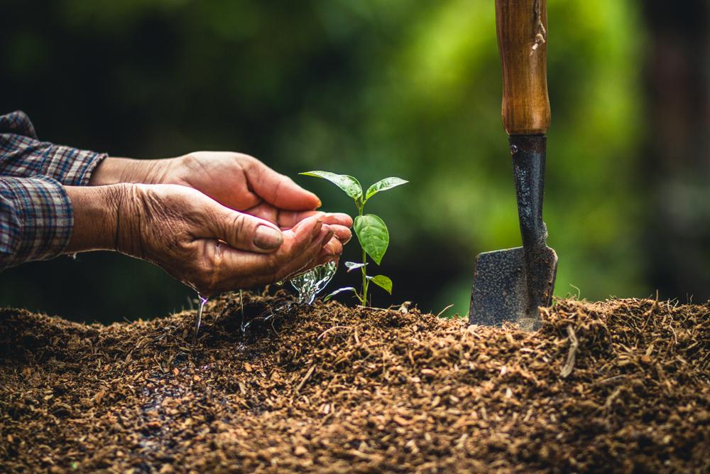 День деревьев: 8 интересных фактов о легких планеты День деревьев: 8 интересных фактов о легких планеты shutterstock 1075705169