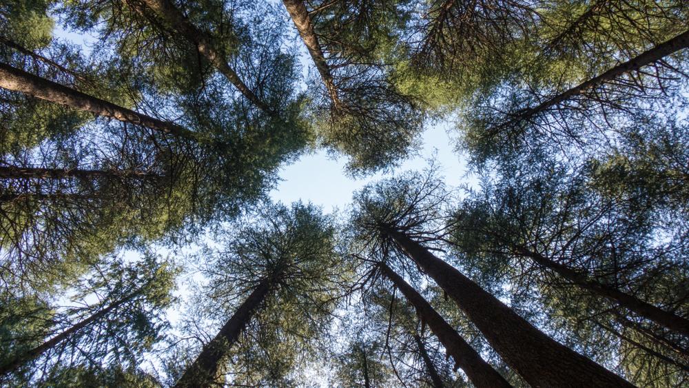 День деревьев: 8 интересных фактов о легких планеты - Вокруг Света