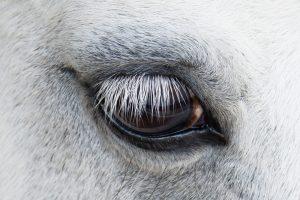 Лошади оценивают людей по выражению лица