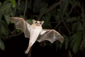 В Харькове выпустили в небо тысячу спасенных летучих мышей