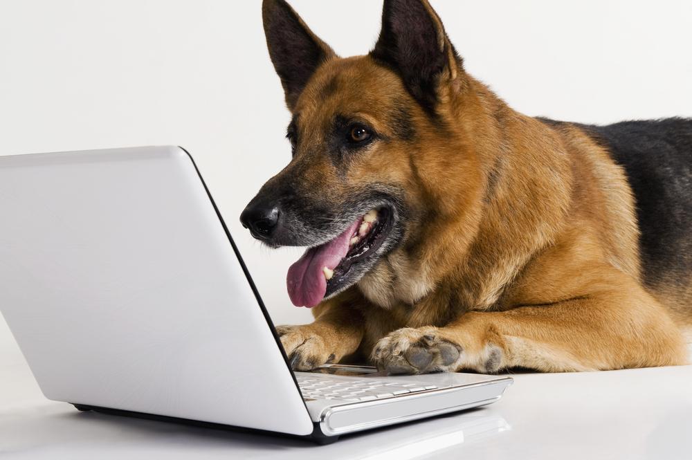 Появилась первая в мире соцсеть для животных.Вокруг Света. Украина