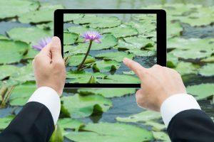 Появилось приложение, распознающее растения и животных по фото