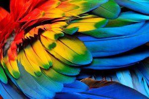 Как язык влияет на восприятие цвета