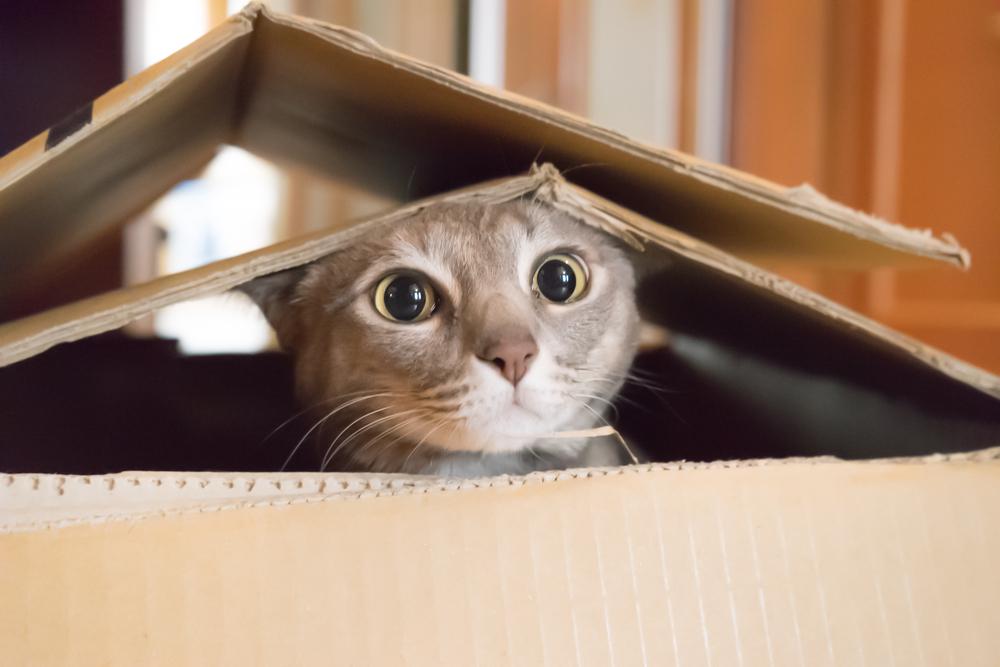 В Ираке открыли первый в стране отель для кошек