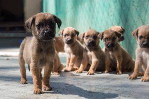 В Украине заработал сервис бездомных животных