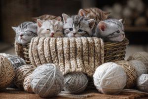 Почему котята такие милые