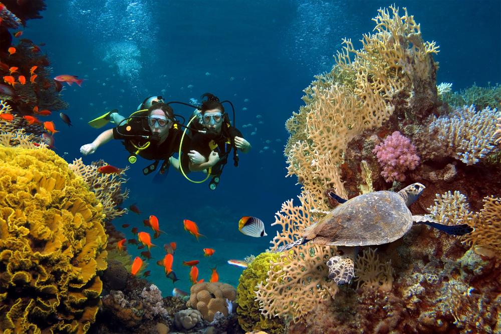 Как исчезновение Большого Барьерного рифа повлияет на человека