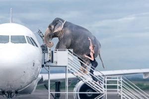 Пассажиров с лишним весом больше не пускают в бизнес-класс