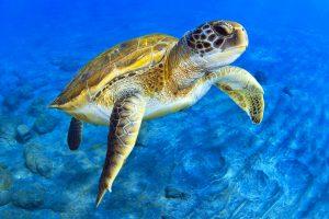 Морским черепахам знакомы приемы карате