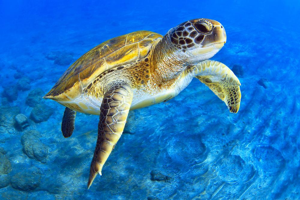 Морским черепахам знакомы приемы карате.Вокруг Света. Украина