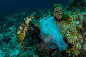 Пластик в океане становится рассадником опаснейших бактерий