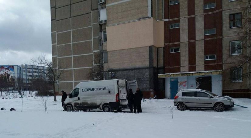 В Киеве создали скорую для бездомных животных