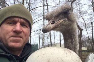 В Межигорье «страусы Януковича» снесли яйцо