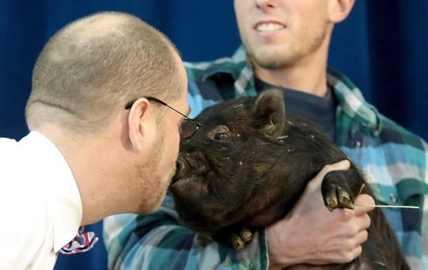 В США директор школы на спор поцеловал свинью.Вокруг Света. Украина