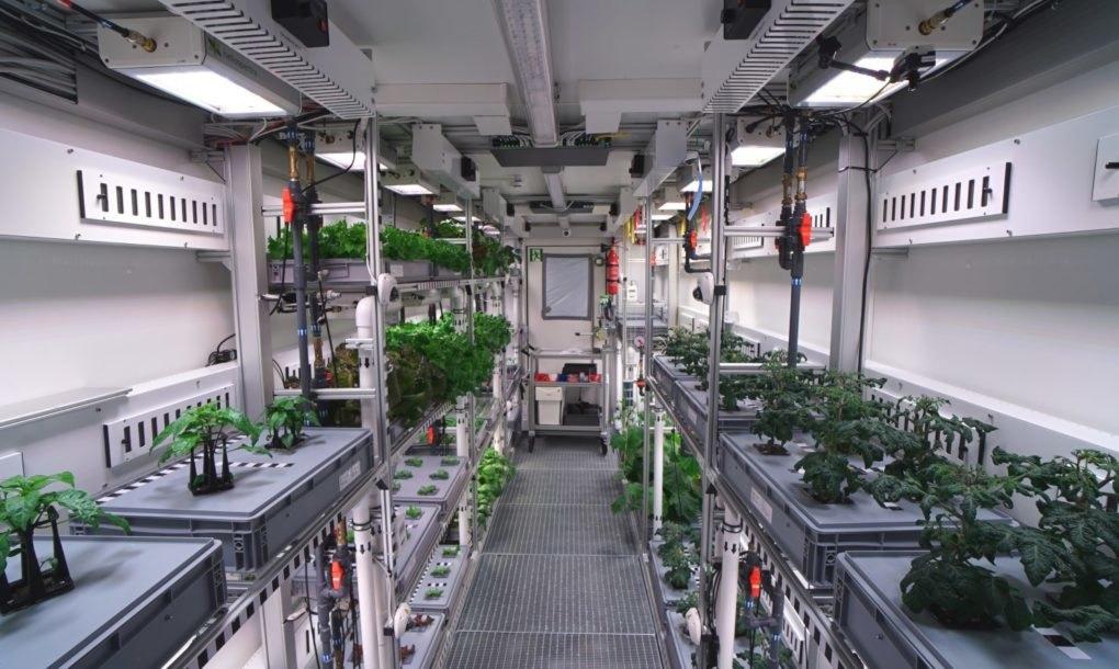 В Антарктике впервые вырастили свежие овощи В Антарктике впервые вырастили свежие овощи zelen 2
