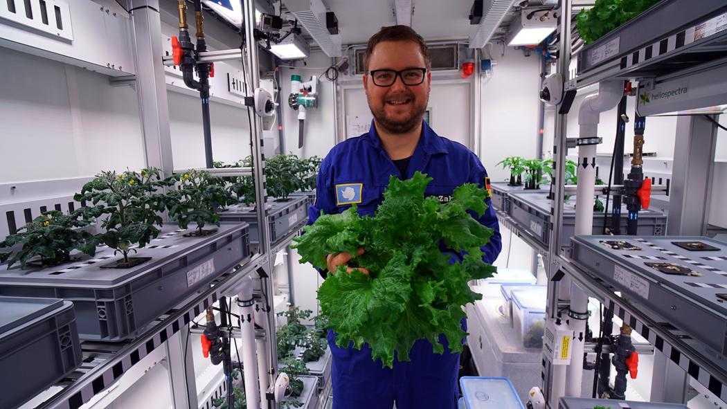 В Антарктике впервые вырастили свежие овощи.Вокруг Света. Украина