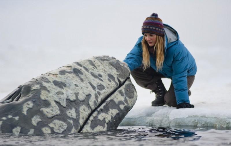 7 фильмов об удивительном подводном мире 7 фильмов об удивительном подводном мире 1434812386 cea557de22