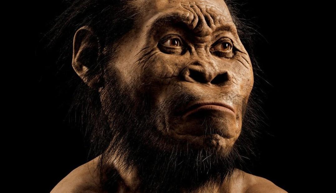 Гоминиды с мозгом современного человека опровергают эволюцию: антропологи