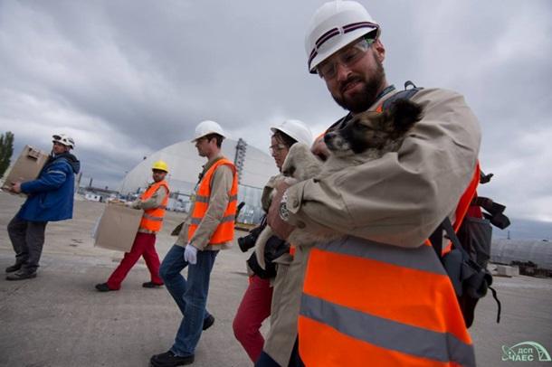 Из Чернобыля в США вывезут сотни бездомных щенков Из Чернобыля в США вывезут сотни бездомных щенков 3 7