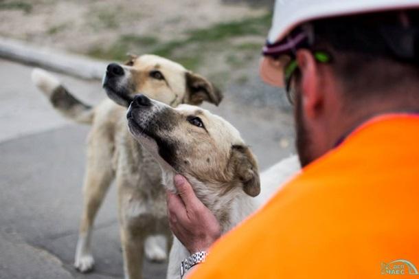 Из Чернобыля в США вывезут сотни бездомных щенков Из Чернобыля в США вывезут сотни бездомных щенков 4 5