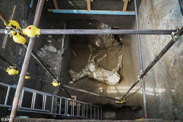 В Помпеях впервые нашли коня. Благодаря черным археологам В Помпеях впервые нашли коня. Благодаря черным археологам 4C10412300000578 5718609 image a 2 1526051663655