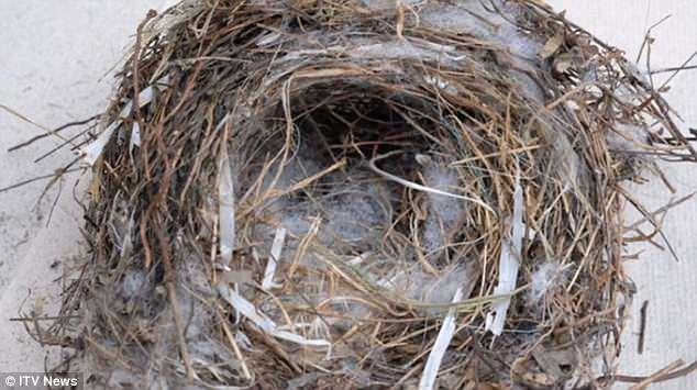 Пластик добрался до заповедных Глапагосских островов Пластик добрался до заповедных Глапагосских островов 4CBB0D3000000578 5783591 image a 31 1527612366535