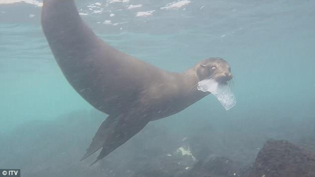 Галапагосские острова завалены пластиком (видео)
