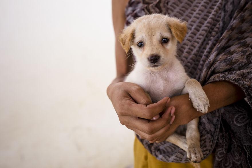 «Коты и собаки расскажут о Камбодже больше, чем достопримечательности» «Коты и собаки расскажут о Камбодже больше, чем достопримечательности» CA 1308 5b06cf783af58  880