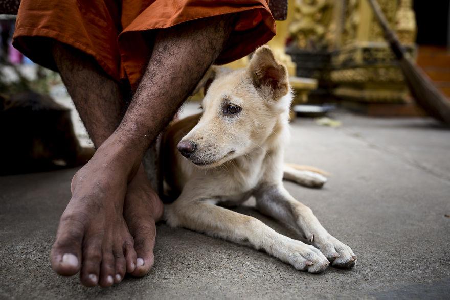 «Коты и собаки расскажут о Камбодже больше, чем достопримечательности» «Коты и собаки расскажут о Камбодже больше, чем достопримечательности» CA 1473 5b06cf7ad8f74  880