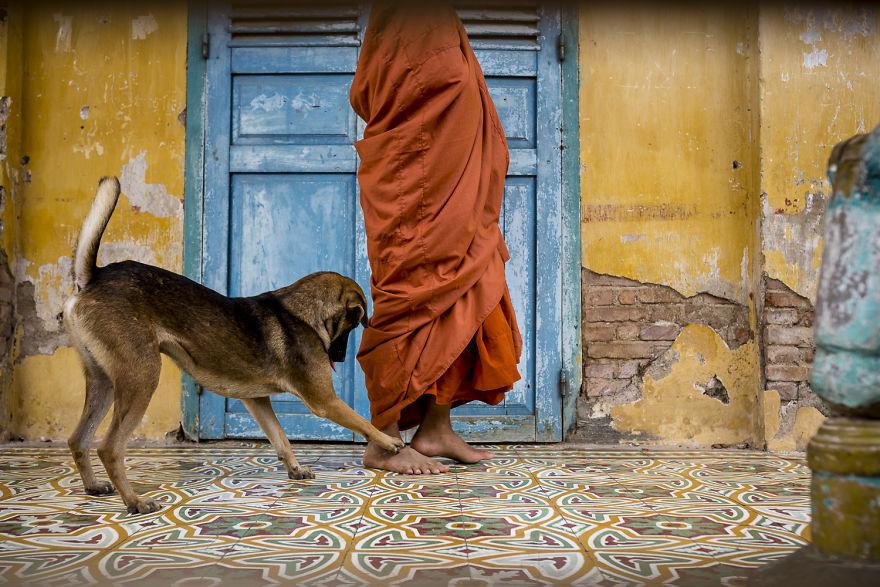 «Коты и собаки расскажут о Камбодже больше, чем достопримечательности» «Коты и собаки расскажут о Камбодже больше, чем достопримечательности» CA 1680 5b06cf7e09ae5  880