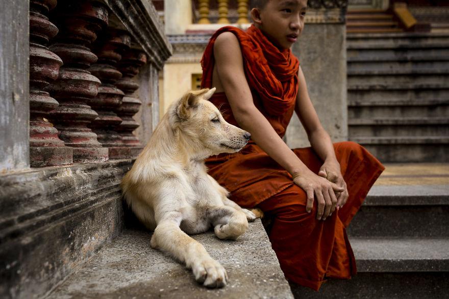 «Коты и собаки расскажут о Камбодже больше, чем достопримечательности» «Коты и собаки расскажут о Камбодже больше, чем достопримечательности» CA 1745 5b06cf81906b0  880