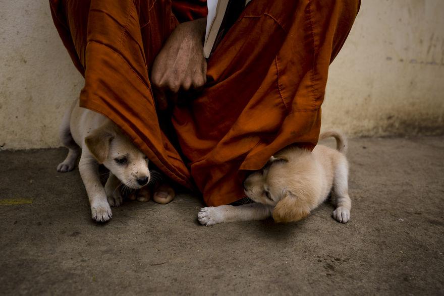 «Коты и собаки расскажут о Камбодже больше, чем достопримечательности» «Коты и собаки расскажут о Камбодже больше, чем достопримечательности» CA 1900 5b06cf84d6417  880