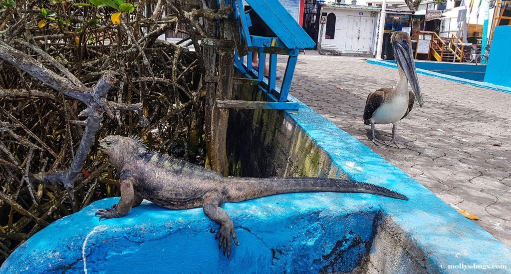 Гигантские черепахи, морские игуаны, действующие вулканы – все о жизни на Галапагосах Гигантские черепахи, морские игуаны, действующие вулканы – все о жизни на Галапагосах Galapagos Puerto Ayora 2 1024x549