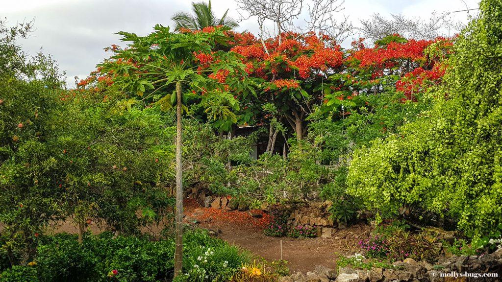Гигантские черепахи, морские игуаны, действующие вулканы – все о жизни на Галапагосах Гигантские черепахи, морские игуаны, действующие вулканы – все о жизни на Галапагосах Galapagos hotel 1 1024x576