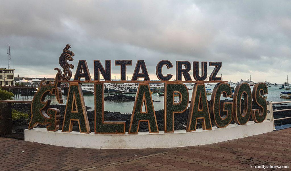 Гигантские черепахи, морские игуаны, действующие вулканы – все о жизни на Галапагосах Гигантские черепахи, морские игуаны, действующие вулканы – все о жизни на Галапагосах Galapagos islands 1024x603