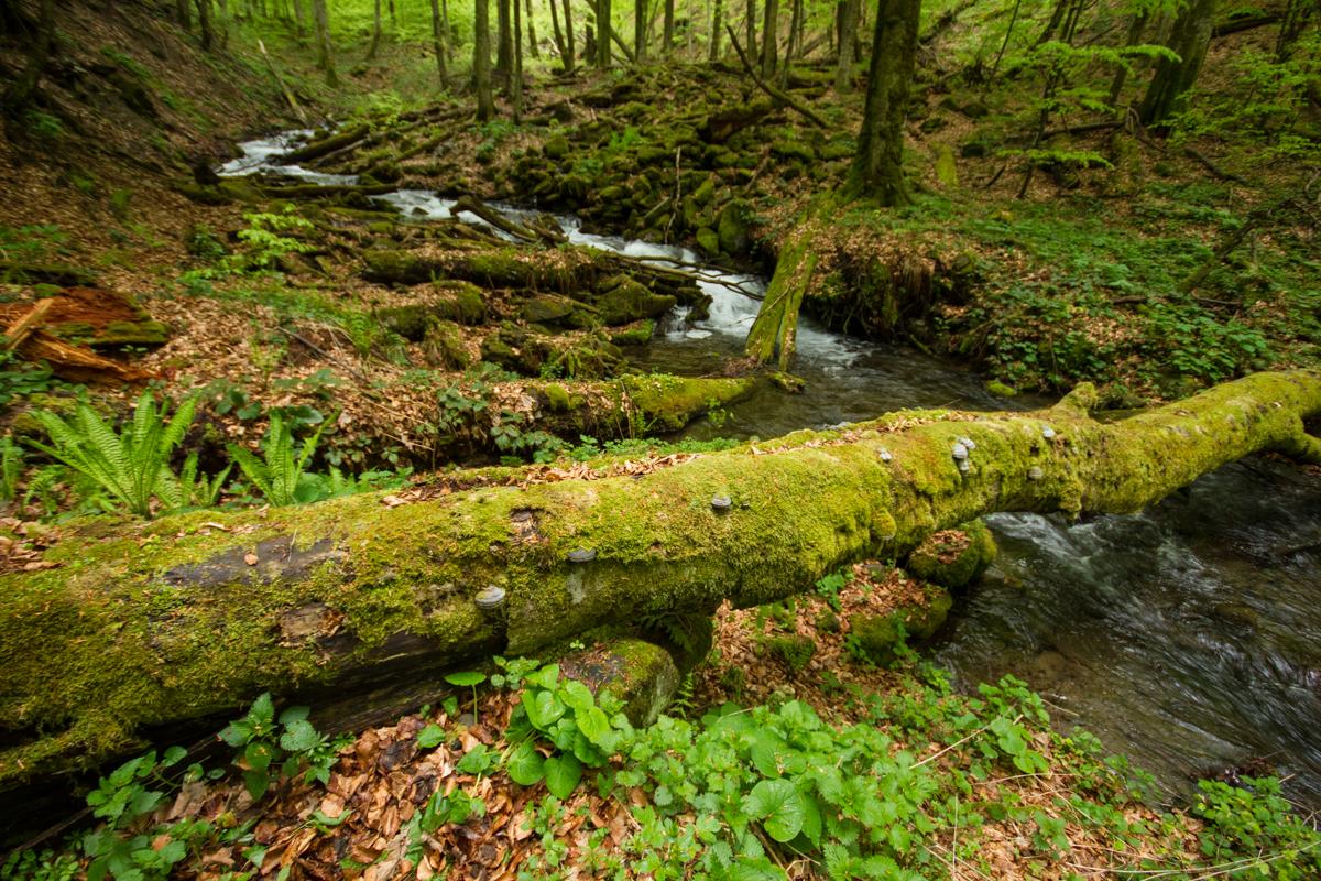 Карпатські праліси: чому саме в Україні збереглися найдавніші ліси Європи.Вокруг Света. Украина