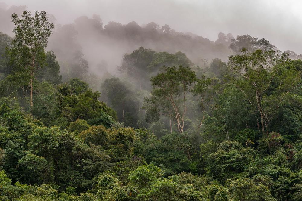 День биоразнообразия: почему нам нужно, чтобы природа была разной День биоразнообразия: почему нам нужно, чтобы природа была разной Samoe vysokoe bioraznoobrazie v tropicheskih lesah